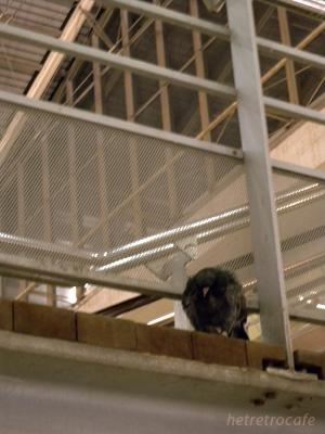 北駅 ハトが階段の縁で縮こんで寝てます