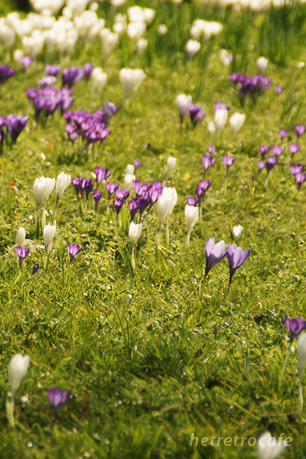 ブルージュ駅前の花