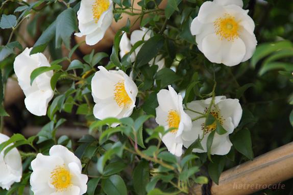 谷中に咲く花