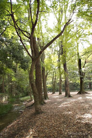 下鴨神社の林